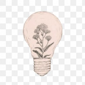 Bulb Plant Cultivation - Drawing Idea Aesthetics Art Sketch PNG