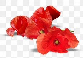 Armistice Day Anzac Day Remembrance Poppy National War Memorial PNG