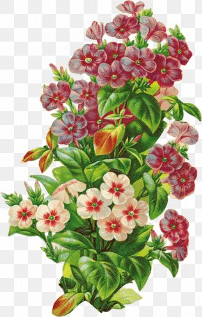 Floral Decorative Pattern - Floral Design Retro Style U68eeu30acu30fcu30eb Flower PNG