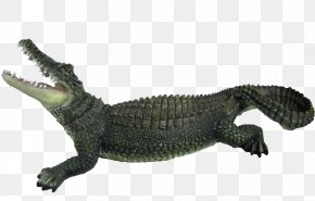 Crocodile - Crocodile Clip Chinese Alligator PNG