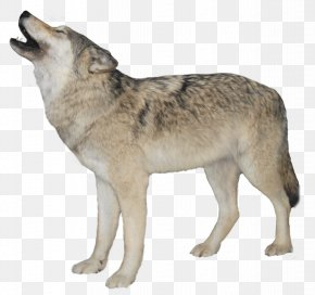 White Wolf Transparent Background - Arctic Wolf Clip Art PNG