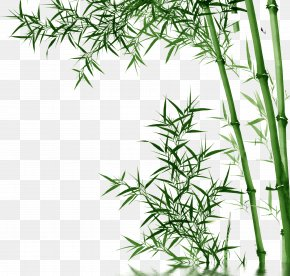 Bamboo,Bamboo - Bamboo Toothpaste PNG