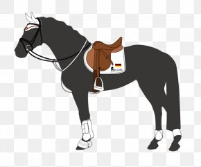 Horse - Horse Tack Stallion Show Jumping Equestrian PNG