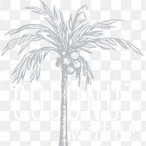 Date Palm - Asian Palmyra Palm Date Palm Twig Leaf Plant Stem PNG