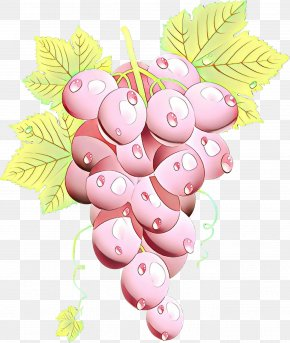 Food Plant - Grape Cartoon PNG
