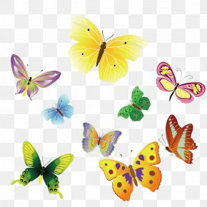 Colorful Butterfly Vector Material - Butterfly Insect Euclidean Vector Clip Art PNG