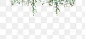 Ivy - Vine Woody Plant Ivy PNG