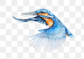 Kingfisher Wings Fly - Bird Watercolor Painting Architect Illustrator PNG