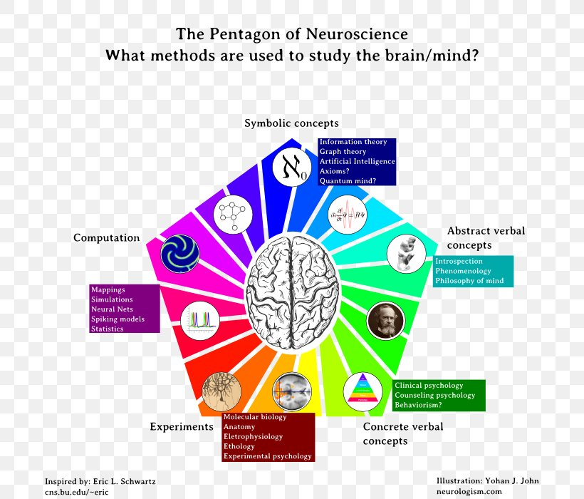 Neuroscience Cognitive Science Pentagon An Essay Concerning Human Understanding, PNG, 800x700px, Neuroscience, Area, Article, Artificial Neural Network, Brain Download Free
