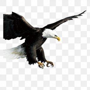 Eagle - Bird Hawk Icon PNG