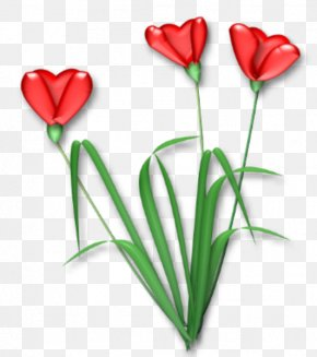 HEART FLOWER - Flowering Plant Cut Flowers Tulip Rosaceae PNG