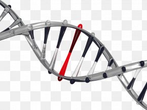 Gene Free Downloads - It's In Your DNA: From Discovery To Structure, Function And Role In Evolution, Cancer And Aging The Moral Code Biology Genetics PNG