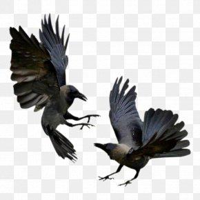 Bird - American Crow Rook Bird Common Raven Flight PNG