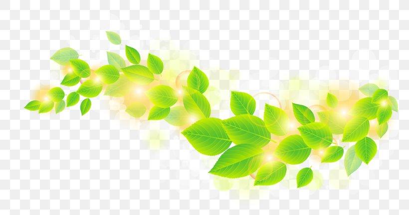 Leaf Green Clip Art, PNG, 800x431px, Leaf, Branch, Color, Grass, Green Download Free