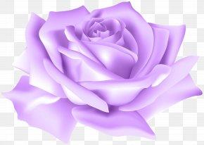 Purple Rose Flower Clip Art Image - Garden Roses Flower Centifolia Roses Clip Art PNG
