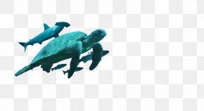 Turtle Island - Marine Mammal Turquoise PNG
