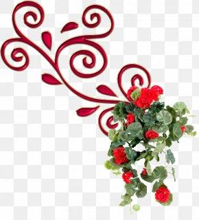 Garden Roses Sweet Scented Geranium Flower Pelargonium Crispum PNG