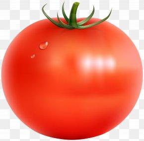 Tomato Transparent Clip Art Image - Tomato Vegetable Clip Art PNG