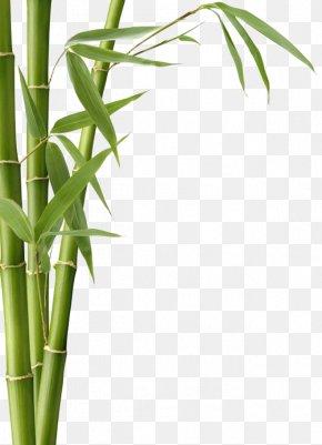 Bamboo - Bamboo Textile Bamboo Charcoal Leaf Fargesia Murielae PNG