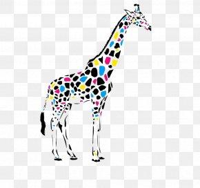 Giraffe - Giraffe Leopard Color Cdr PNG