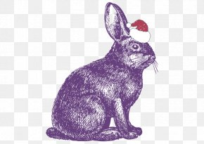Vector Purple Rabbit - Rabbit Show Jumping Drawing Illustration PNG