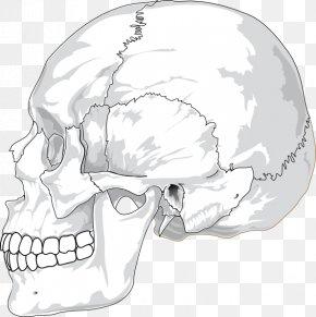 Skull Profile Cliparts - Skull Human Head Human Skeleton Clip Art PNG