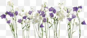 Flower - Borders And Frames Flower Clip Art PNG