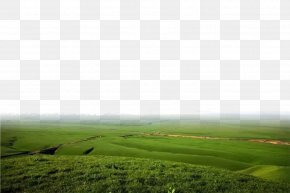 The Bottom Edge Of The Prairie Background - Lawn Rural Area Land Lot Ecoregion Wallpaper PNG