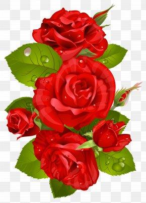 Red Rose Decoration Transparent Clip Art Image - Rose Red Flower Clip Art PNG
