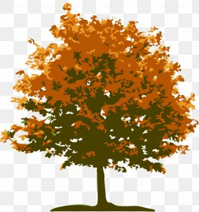 Tree - Tree Landscape Lawn Red Maple PNG