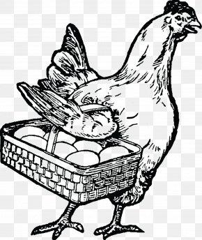 Chicken - Clip Art Chicken Rooster Image Illustration PNG