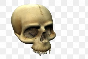 Scary Skull - Skull And Crossbones Skeleton Snout Mouth PNG