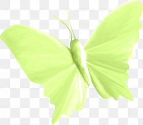 Butterfly - Butterfly Insect Paper Moth PNG
