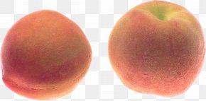 Peach Image - Peach Icon PNG