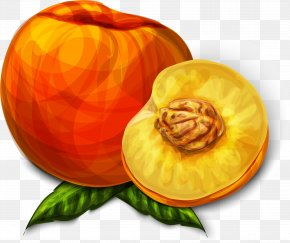 Vector Hand Painted Peach - Juice Peach PNG