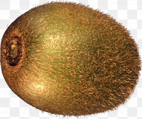 Kiwi Image, Free Fruit Kiwi Pictures Download - Kiwifruit PNG