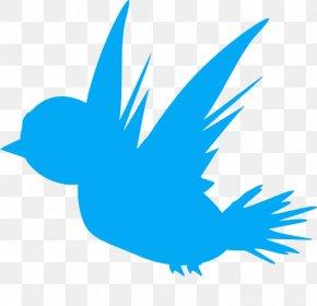 Bird Cartoon Download - Clip Art Bird Animated Cartoon Image PNG