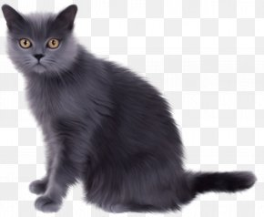 Witch Cat - Norwegian Forest Cat Persian Cat Kitten Clip Art PNG