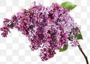 Lilac Flower - Lilac Flower Bouquet Garden Roses Clip Art PNG