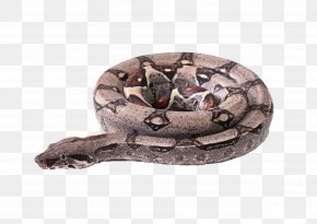 Plate With Snake - Snake Boa Constrictor Vipers Clip Art PNG
