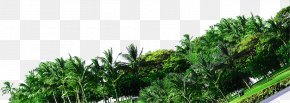 Synthetic Photography Resort Green Forest - Tree Forest Green Photography Coconut PNG