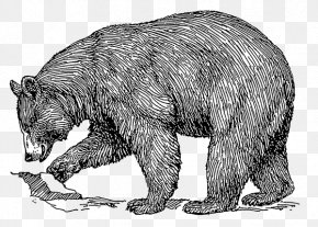 Formosan Black Bear - American Black Bear Polar Bear Brown Bear Clip Art PNG