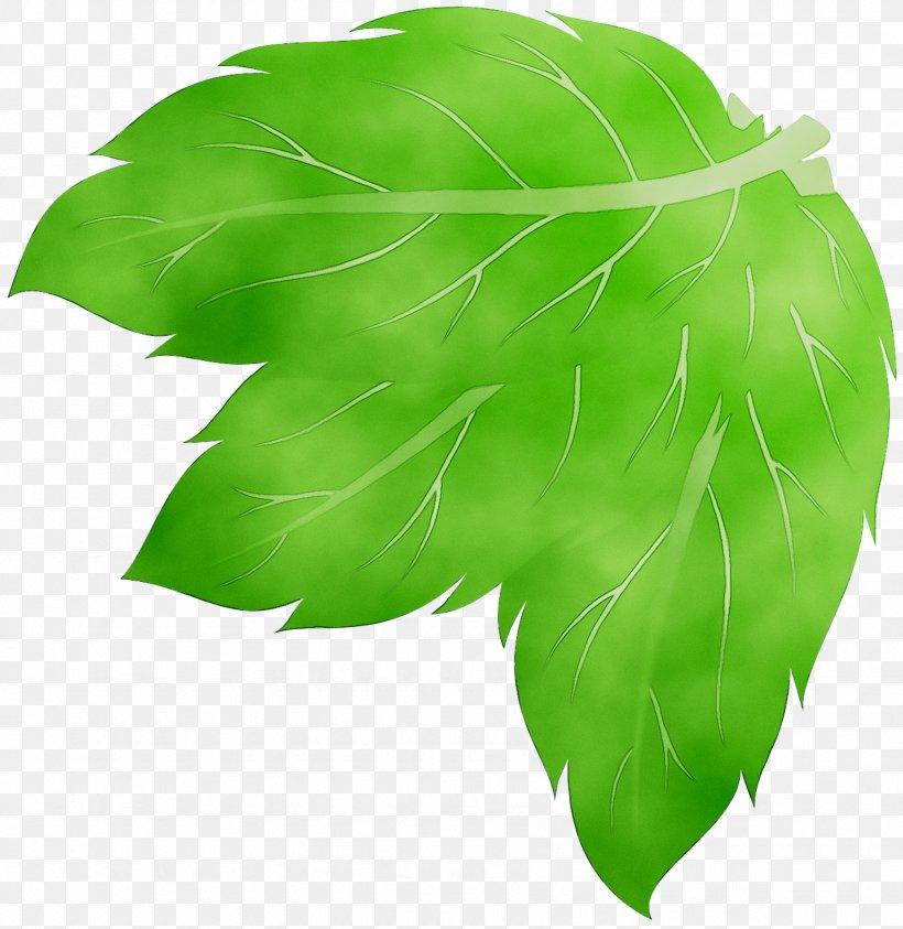 Green Leaf Tree, PNG, 1693x1742px, Green, Botany, Leaf, Plant, Tree Download Free