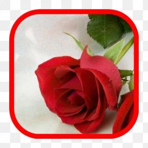 Valentine's Day - Valentine's Day Desktop Wallpaper Love Girlfriend Happiness PNG