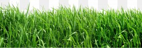 Grass Clipart Picture - Lawn Artificial Turf Insecticide Insect Repellent Garden PNG