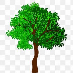 Trees - Summer Tree Clip Art PNG
