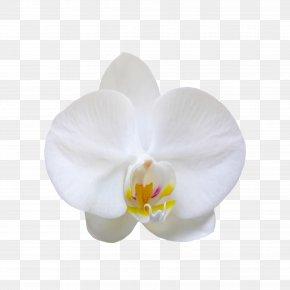 Creative Abstract Flower Bouquet - Flower Bouquet Nosegay PNG