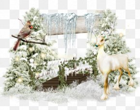 Snow Bird Cartoon Deer - Winter Snow Formosan Sika Deer Blog PNG