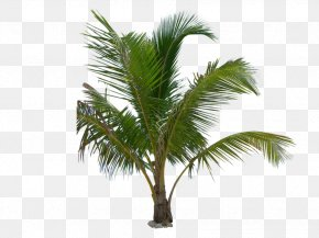 Palm Leaf - Arecaceae Date Palm Queen Palm Tree PNG