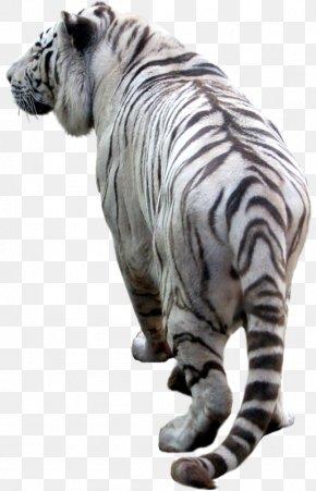 Big - Tiger Photography Clip Art PNG